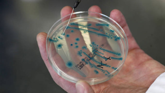 Bacteria outbreak due to ocean warming
