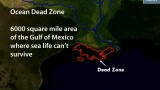 NOAA: Huge Ocean Dead Zone in Gulf of Mexico (August 2013)