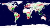 Plant Productivity Reduction with Climate Change