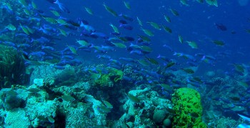 State of the Ocean: Ocean Acidification and Previous Marine Extinctions