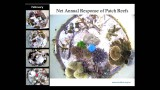 Reef decalcification under business-as-usual CO2 emission scenarios – Sophie Dove (24mins lecture)