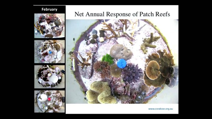 Reef decalcification under business-as-usual CO2 emission scenarios - Sophie Dove (24mins lecture)