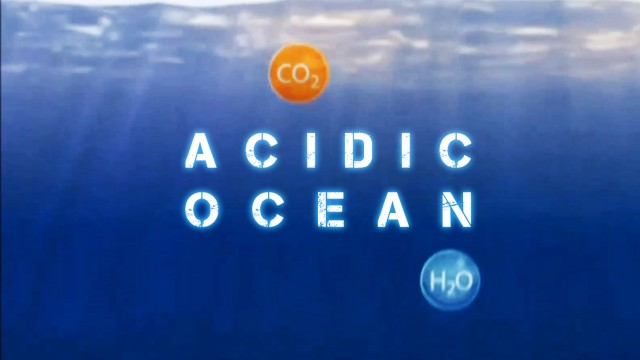 Acidic Ocean Kills Millions Of Shellfish In Vancouver Canada