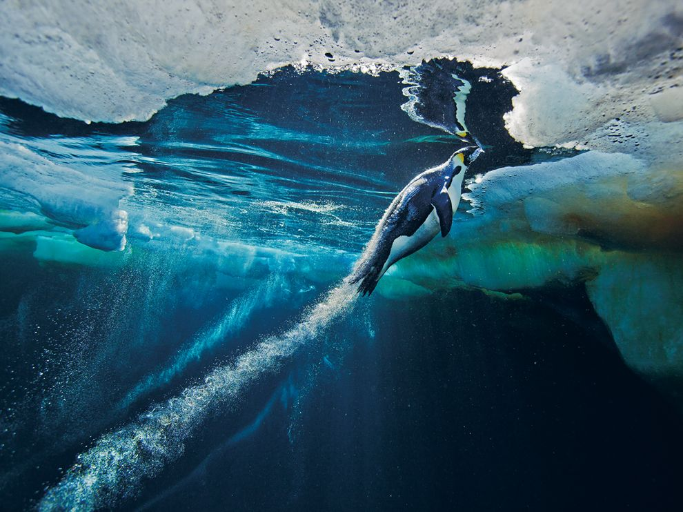 Why is Antarctic sea ice expanding?